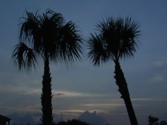 Palm Trees 1 Stock Footage