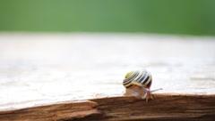 Garden Snail 'Chillin' Stock Footage