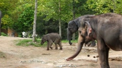 Very cute baby elephant with its mother Stock Footage