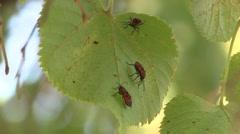 Bugs on a leaf - stock footage