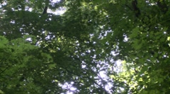 Looking up at the trees. (1 of 2) Stock Footage