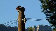 Stock Video Footage of squirrel over electric wood bracket wooden pole