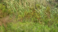 Grass 2 Stock Footage