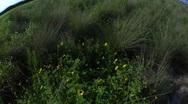 Grass 9 Stock Footage