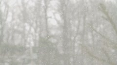 Snow falling and trees Stock Footage
