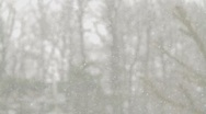 Stock Video Footage of Snow falling and trees