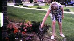 Woman Watering Flowers Roses Gardening 1970s Vintage Film Home Movie 622 Stock Footage