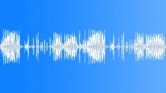 ANIMAL, CHIMPANZEE - sound effect