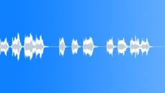 SEAL LION - sound effect