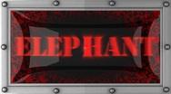 Elephant on led Stock Footage