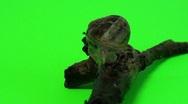 Green screen snail Stock Footage