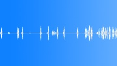 BIRD, CRANE - sound effect