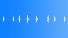 BIRD,EASTERN,MEADOWLARK - sound effect