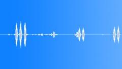 BIRD, HAWK Sound Effect