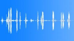 BIRD,PARROT - sound effect