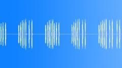BIRD, RED BELLIED WOODPECKER - sound effect