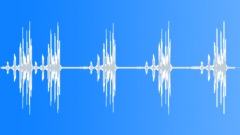 BIRDS, AMAZON - sound effect