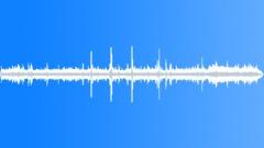 BIRD, SEAGULLS - sound effect