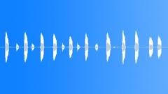 BIRD,STARLING - sound effect