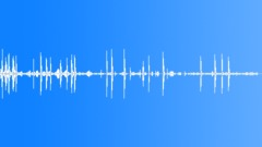 BIRDS,VARIOUS Sound Effect