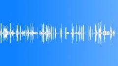 BIRD,WHOOPER,SWAN Sound Effect