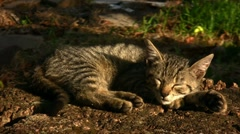 Young cat enjoying the sunlight Stock Footage