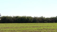 Crop spraying - fertilizer - backlit Stock Footage
