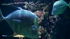 Seafood Life 20110925-130744 Stock Footage
