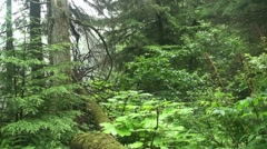 Temperate rain forest Stock Footage