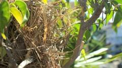 Bird Nest - bird feeding youngs - stock footage