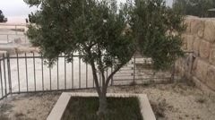 tree in memory of Pope Johannes 2 - stock footage