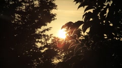 Sunset Behind the trees - stock footage