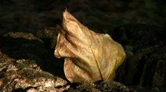 Dry leaf and old stump Stock Footage