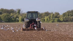 Birds follow a tractor and powered harrow to find food. Slow motion Stock Footage
