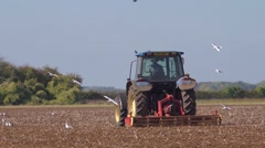 Seabirds follow a powered harrow to find food. Slow motion, mid shot. Stock Footage