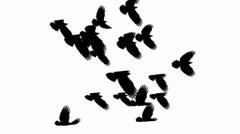 Birds_01 Stock Footage