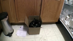 CAT IN THE BOX Stock Footage