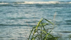 Ocean view behind grass - stock footage