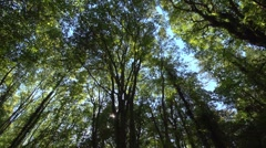 Extreme wide angle greenwood, long pan right, sunlight, dappled shade. Stock Footage