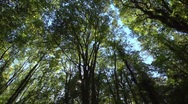 Stock Video Footage of extreme wide angle greenwood, long pan right, sunlight, dappled shade.