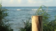 Beach ocean waves view behind bush Stock Footage