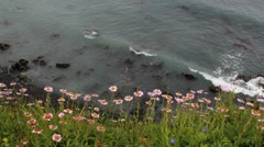 Pink Wildflowers Ocean Scenic Stock Footage