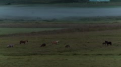 Horses in the mist Stock Footage