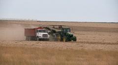 Onion harvest Stock Footage