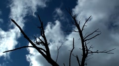 Dead tree and clouds in time lapse Stock Footage