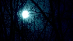 stock video footage moon and branches - stock footage