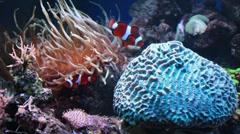 Marine aquarium Stock Footage