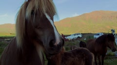 Horse and a baby foal Stock Footage