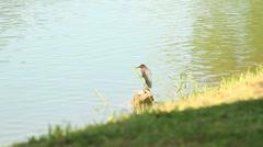 Bird in stone on beautiful lake - stock footage