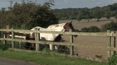 Horse stands at fence. Stock Footage